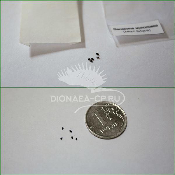 Семена Дионеи