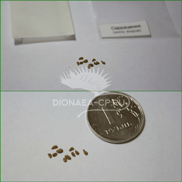 Саррацения семена