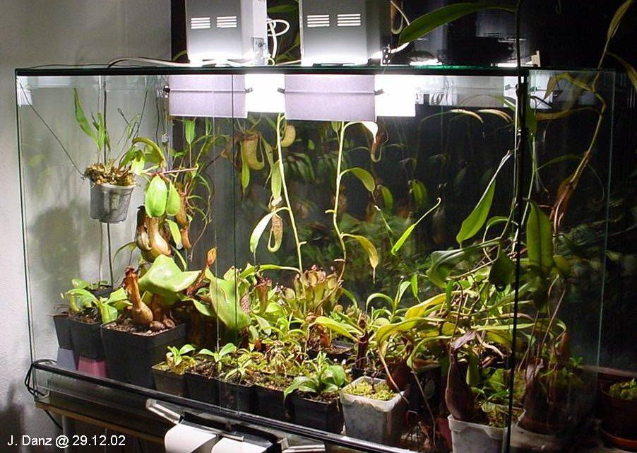 Досветка и освещение Хищных растений