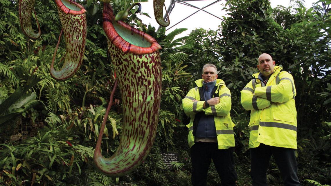 Как определить неквалифицированного продавца хищных растений