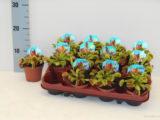 Как в цветочном магазине купить здоровое хищное растение?
