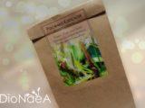 Набор для выращивания «Росянка Капская»